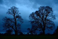296/365 Winter dawn