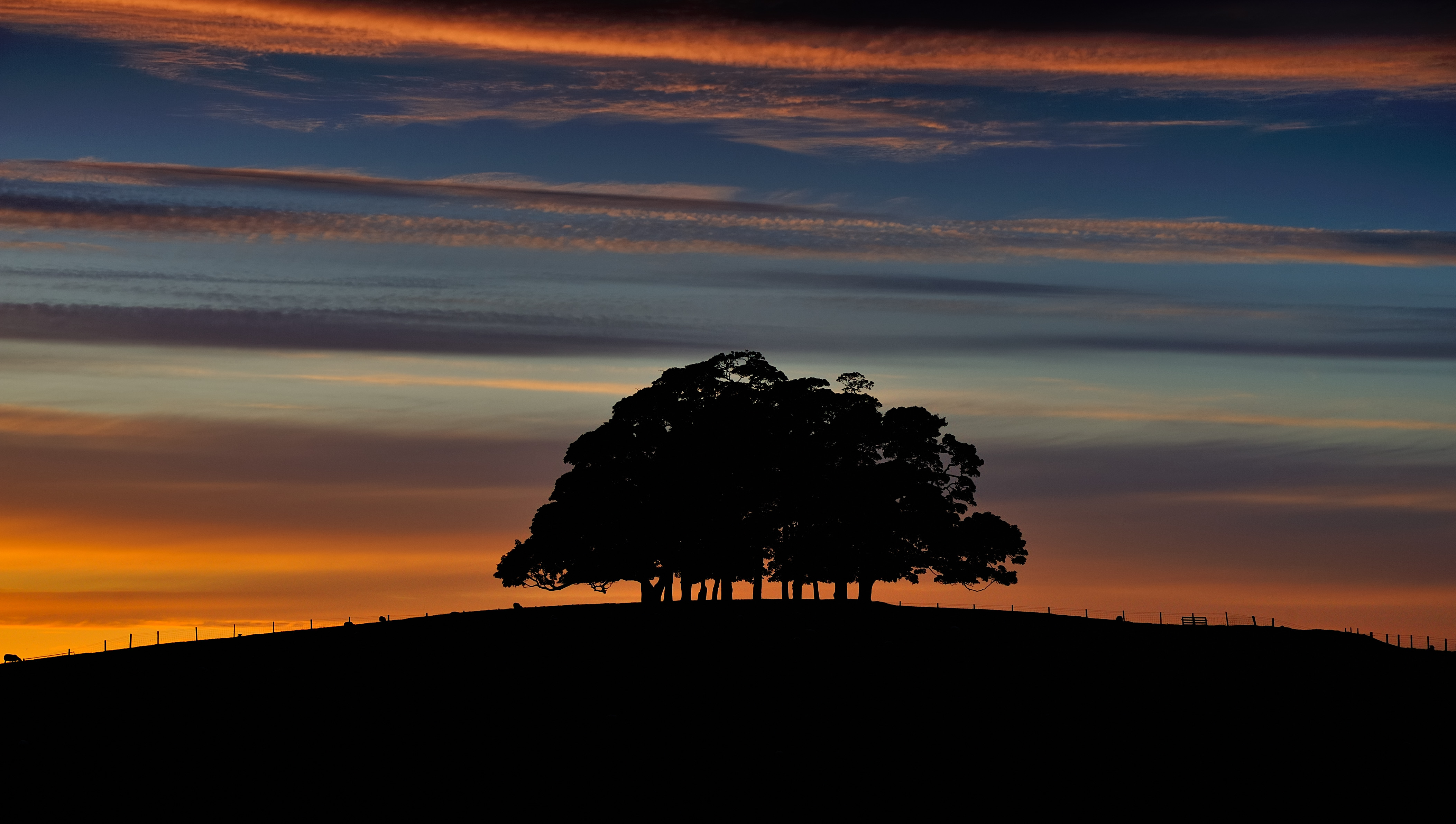 Copse at dusk