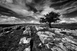 Limestone Lines