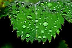 121/365 Raindrops