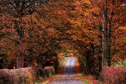 204/365 Glorious autumn