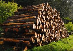 020/365 Log pile