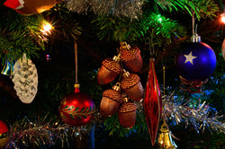 255/365 Christmas acorns