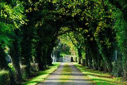 209/365 Autumn awaits
