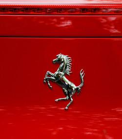 059/365 Prancing horse