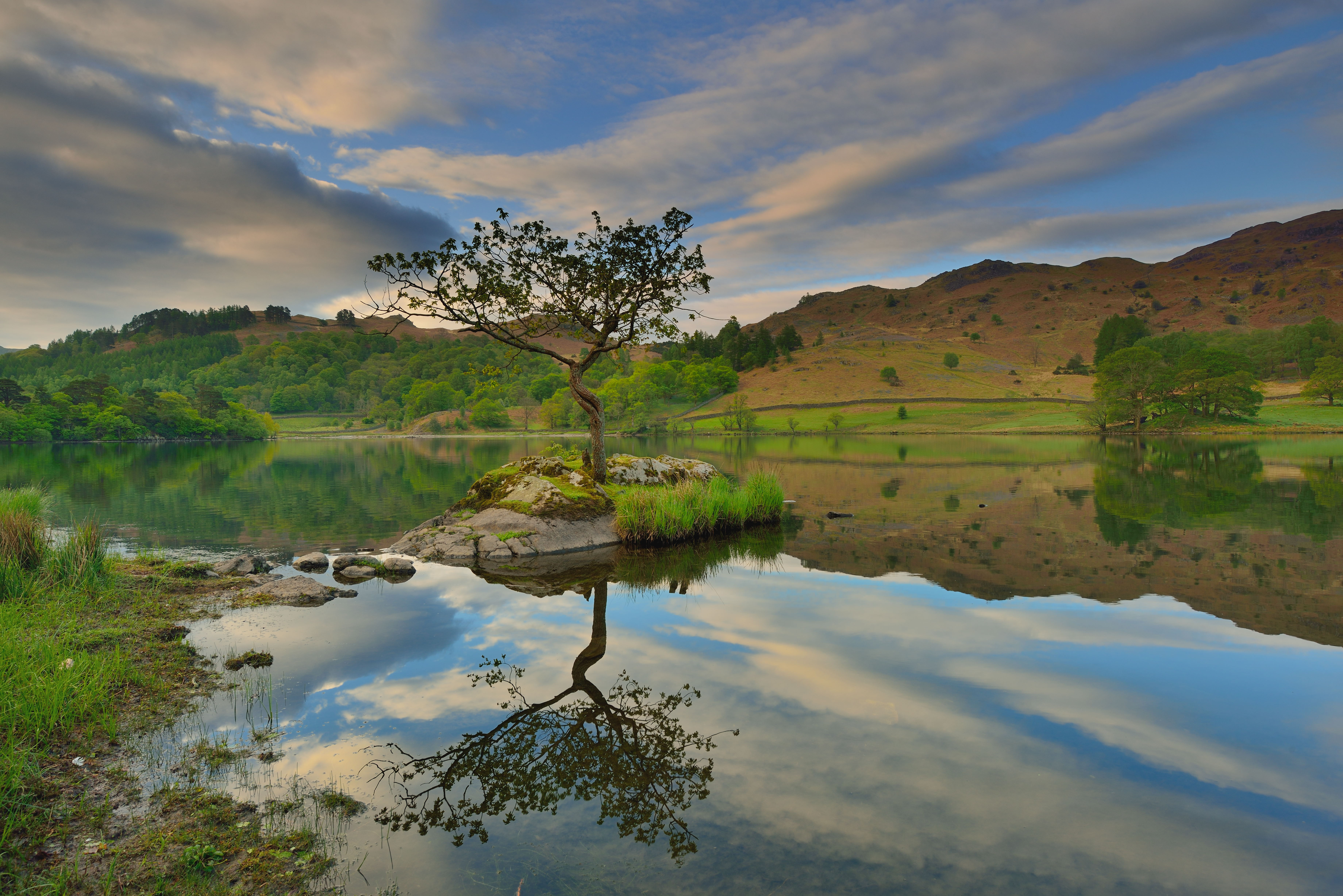 The Rydal tree