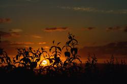 080/365 July sunset