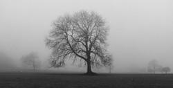343/365 Through the mist