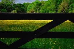 065/365 Through the gate