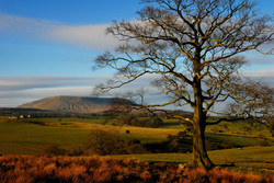 The tree and the hill