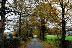 205/365 Autumn lingers