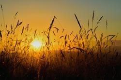 117/365 Harvest sunset