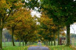 197/365 Autumn colonnade