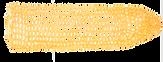 katawara_corn3.png