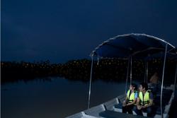 Fireflies Tour