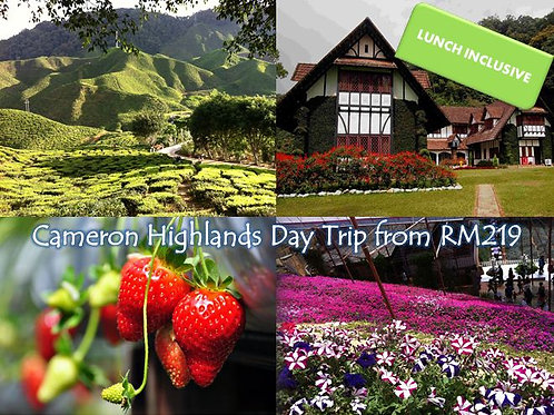 Cameron Highlands Tour