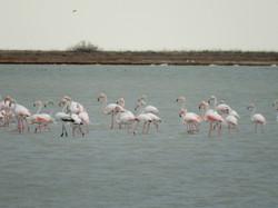 Messologhi lagoon birds