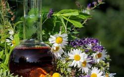 Aromatic plant extract