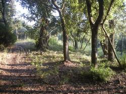 Poulades landscape