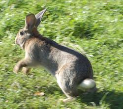Bunnies in farms