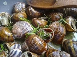 Cretan fried snails