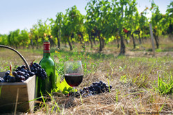 greek wine production