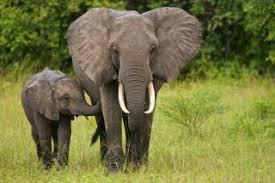 Virtual Field Trip & Elephant Toothpaste!