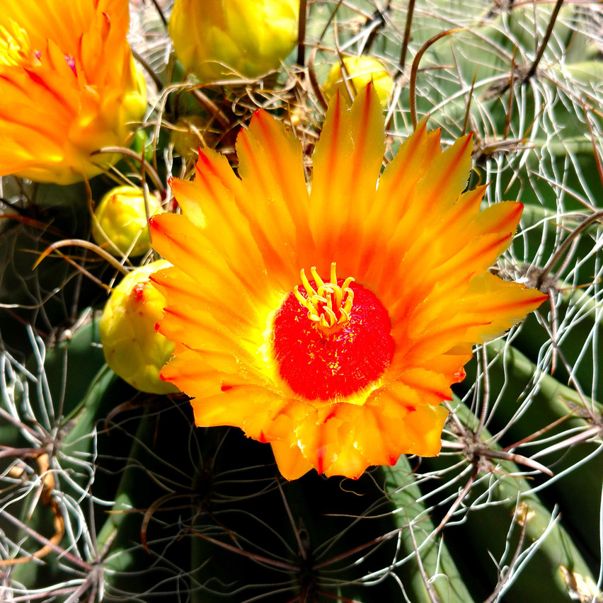 Desert bloom in Tucson, Arizona