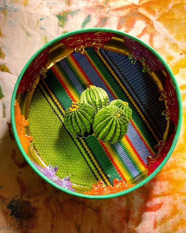 """Minimalist Cactus"" Shadowbox by Grace Rhyne"