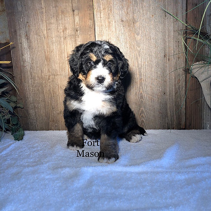 Lukas (Reserved)