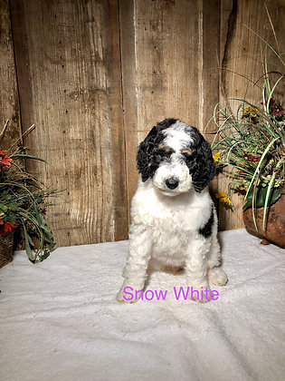 Snow White (Reserved)