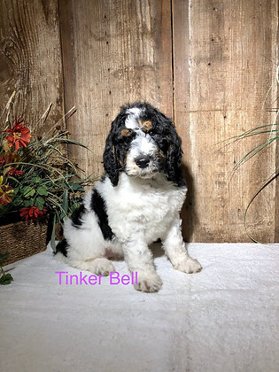 Tinker Bell (Reserved)