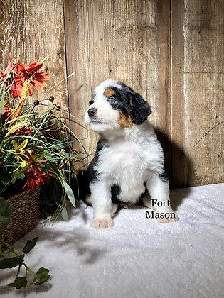 Baxter (Reserved)