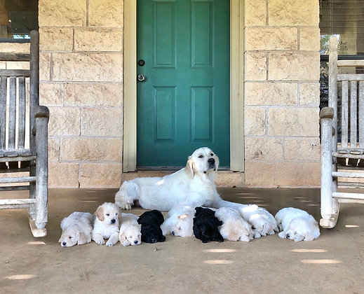 Piper and her Babies