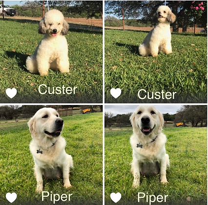 Piper & Custer