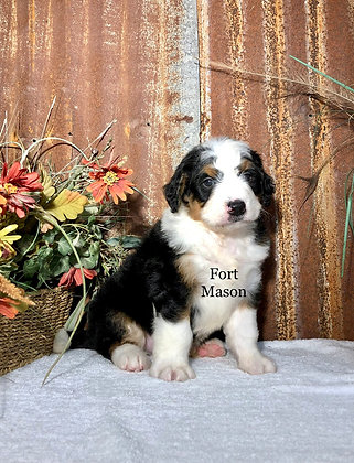 Boots (Reserved)