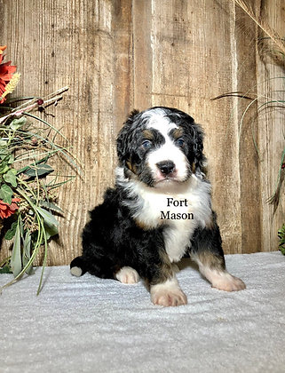 Jacob (Reserved)