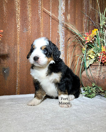 Tank (Reserved)