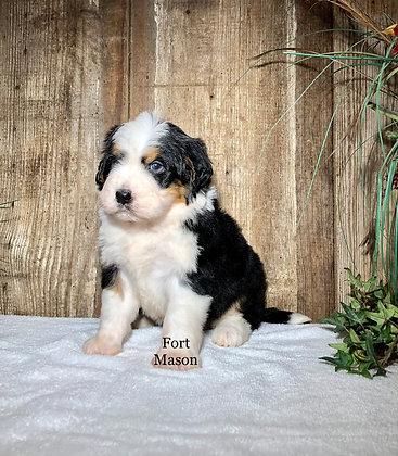 Jasper (Reserved)