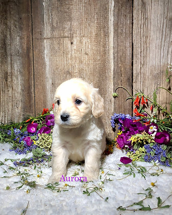 *Aurora* (Reserved)