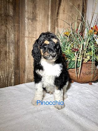 Pinocchio (Reserved)