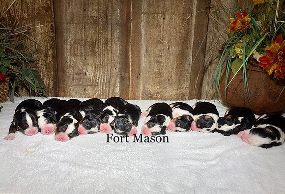Suzy's Puppies