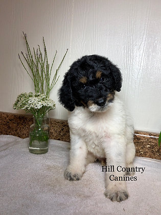 Raleigh (Reserved)