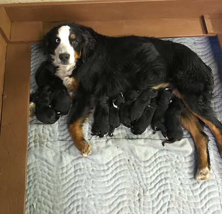 Brandy & Luke's Puppies are here!