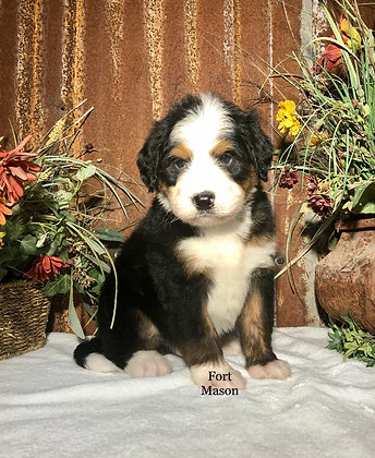 Gideon (Reserved)