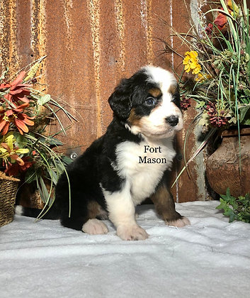 Giggles (Reserved)