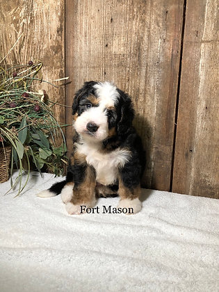 Sully (Reserved)