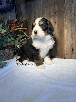 Maximus (Reserved)