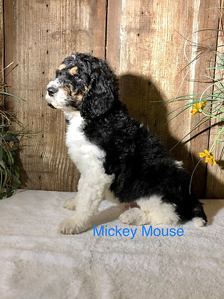 Mickey Mouse (Reserved)