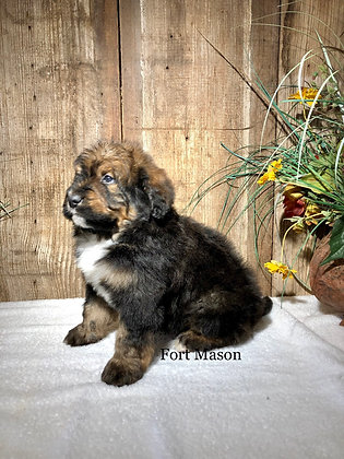 Amos (Reserved)